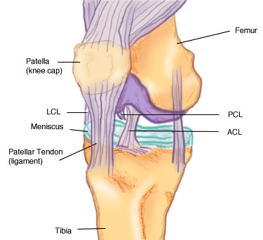 medial and lateral collateral ligament injuries | fit for life, Human Body