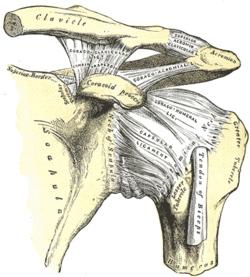 Shoulder Tendonitis