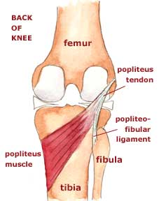 Pain at the Back of My Knee…The Popliteus Syndrome
