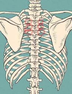 Slipped rib syndrome location